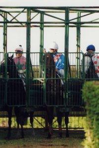 Les chevaux prêts aux ordres du starter