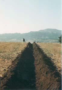 """Le sillon est droit. La partie opposée est visible au loin vers la colline de Valentano. Les personnes âgées: """"Adè dritto come 'na schioppettata"""" (Il est droit comme un coup de fusil)"""